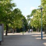 Boulevard Kastanienallee in Blüte